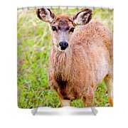 Curious Mule Deer Frolicking On A Colorado Spring Afternoon Shower Curtain