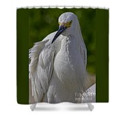 Curious Shower Curtain