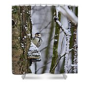 Curious White-backed Woodpecker Shower Curtain