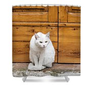 Curious White Cat  Shower Curtain