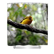 Curious Yellow Warbler Shower Curtain