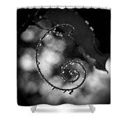 Curl Shower Curtain