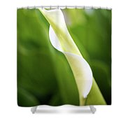 Curled Calla Shower Curtain
