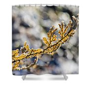 Curled Fern Frond Tip Shower Curtain