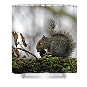 Curled Tail Shower Curtain