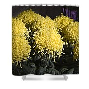 Curly Mums Shower Curtain