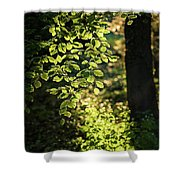 Curtain Of Leaves Shower Curtain