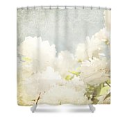 Curtains And Fountains Of Roses Shower Curtain