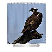 Curved Osprey Shower Curtain