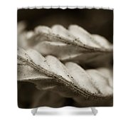 Curves Shower Curtain