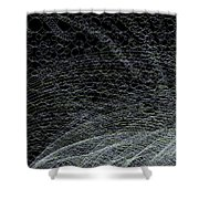 Curves.1.11 Shower Curtain