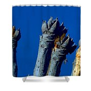 Cussonia In Blue Shower Curtain