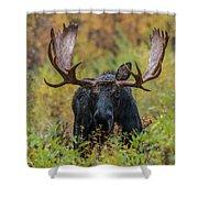 Custer In Autumn Shower Curtain