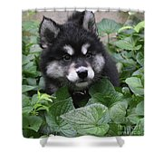 Cute Alusky Puppy In A Bunch Of Plant Foliage Shower Curtain