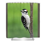 Cute And Ornery Shower Curtain