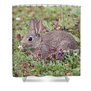 Cute Baby Bunny Shower Curtain