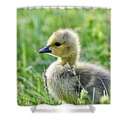 Cute Baby Goose In A Grass Field Shower Curtain