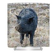 Cute Black Pig Shower Curtain