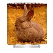 Cute Bunny Shower Curtain