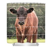 Cute Calf Shower Curtain