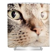 Cute Cat Close-up Portrait Shower Curtain