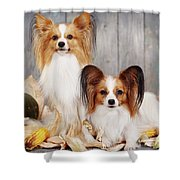 cute couple dogs breed papillon by Iuliia Malivanchuk  Shower Curtain