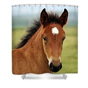 Cute Foal Shower Curtain