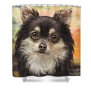 Cute Furry Brown And White Chihuahua On Orange Background Shower Curtain