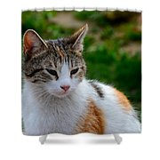 Cute Grey White And Orange Cat Poses And Gazes Shower Curtain