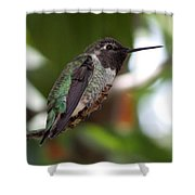 Cute Hummingbird Ready For Action Shower Curtain