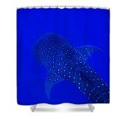 Cute Little Fishy...... Shower Curtain