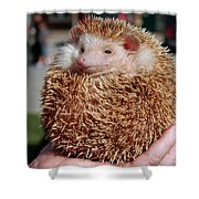 Cute Little Hedge Ball Shower Curtain