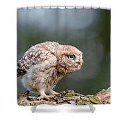 Cute Little Owlet Shower Curtain