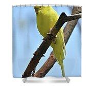 Cute Little Parakeet Resting On A Branch Shower Curtain