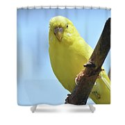 Cute Little Yellow Budgie Bird In Nature Shower Curtain