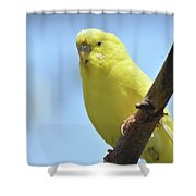 Cute Little Yellow Parakeet In The Rainforest Shower Curtain