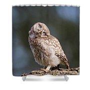Cute, Moi? - Baby Little Owl Shower Curtain