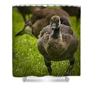 Cute On The Move Shower Curtain