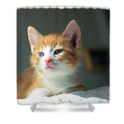 Cute Orange Kitten With Large Paws In Sunny Day Shower Curtain