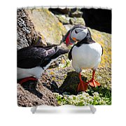 Cute Puffin Couple In Iceland Latrabjarg Shower Curtain