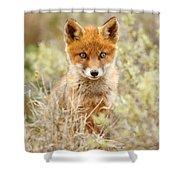 Cute Red Fox Kit Shower Curtain
