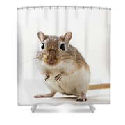 Cute Rodent Shower Curtain
