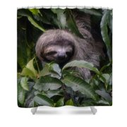 Cute Sloth Face Shower Curtain