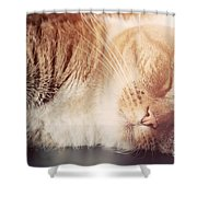 Cute Small Cat Sleeping Shower Curtain