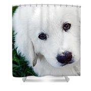 Cute White Puppy Dog Portrait. Polish Tatra Sheepdog Shower Curtain