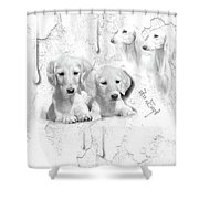 Cute White Salukis With Puppies Shower Curtain