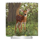 Cute Whitetail Fawn Shower Curtain by Crista Forest