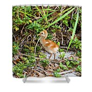 Cutie-beauty Shower Curtain
