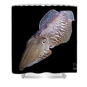 Cuttlefish At Night Shower Curtain