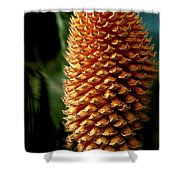 Cycad Cone Shower Curtain